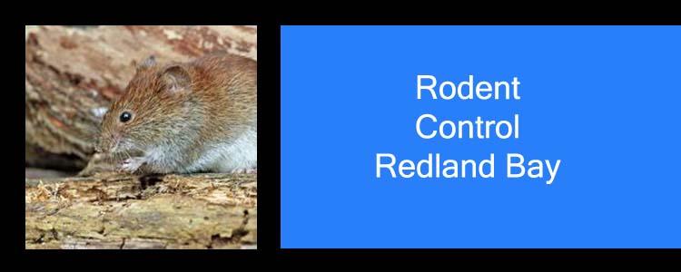 Rodent Control Redland Bay